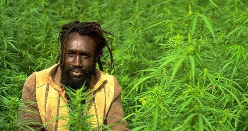 Jamaican Marijuana Farmer