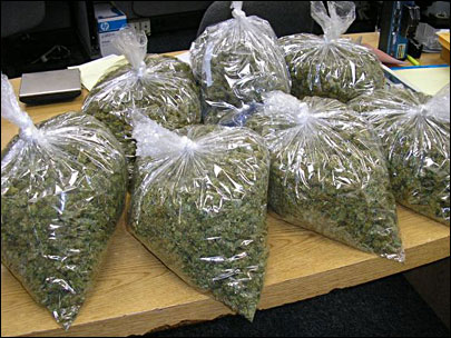 Marijuana seized in Jamaica