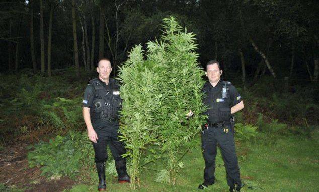 Police with marijuana