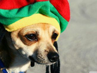 Dogs love reggae music