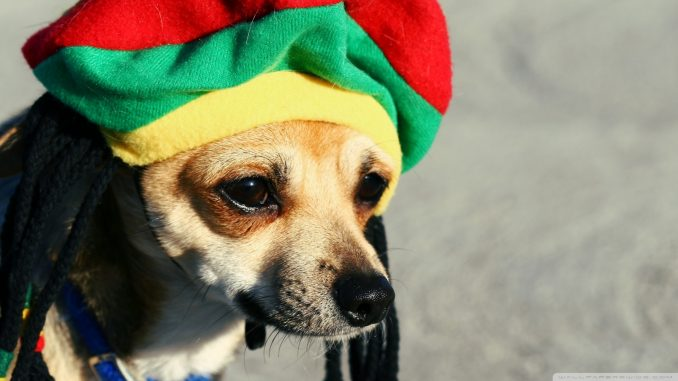Dogs love reggae music