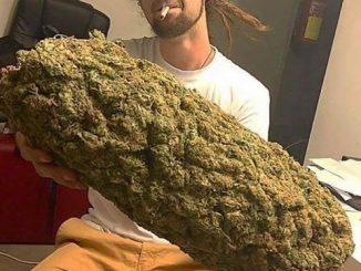 God created marijuana